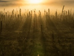 Early morning sun on the boreal forest in the Peel Watershed © Peter Mather -