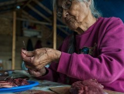 Laura Firth, a Tetlit Gwich'in elder from Fort McPherson, prepares caribou meat © Peter Mather -