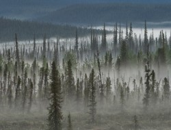 Boreal forest in the Peel Watershed © Peter Mather -